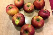Jemy jabłka!